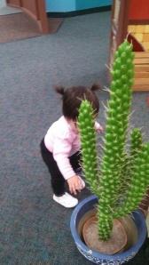 "A fascinating plastic cactus in ""Mexico"""