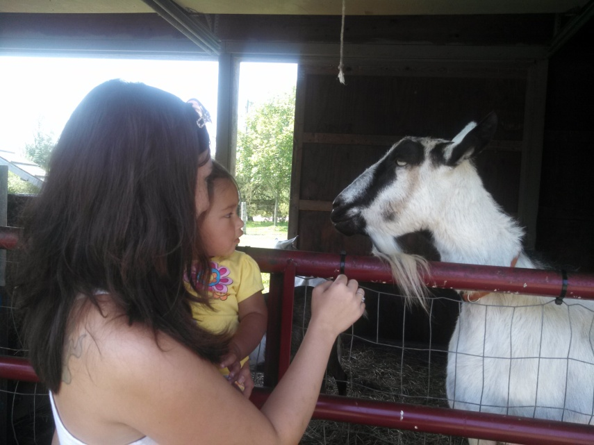 Face to face with the goats