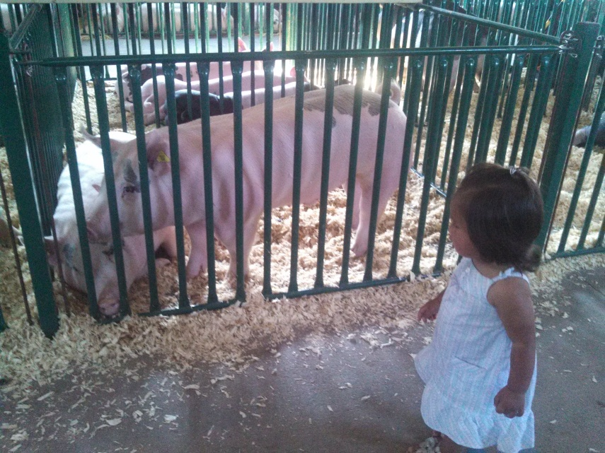 She was more into the horses and ducks, but I totally loved the pigs