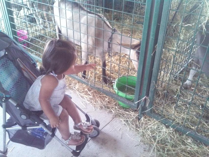 Gotta love the goats