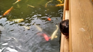 Koi fish watching in the Japanese Garden (fish being her second favorite animal right now)
