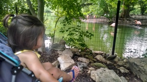 Watching flamingos and ducks (her current favorite animal) in their beautiful lagoon