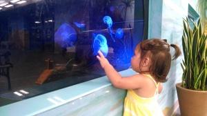 Jellyfish exhibit in an indoor area of the Children's Zoo
