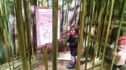 Bamboo forest in the Japan exhibit