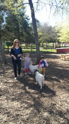 Grooming and feeding the goats